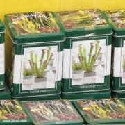 קיט לגידול שופרית בשוק הפרחים