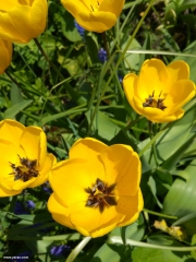 פרחים בסאנסה שחאנס