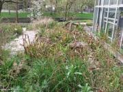 גינת צמחים טורפים בהורטוס בוטניקוס
