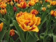 תערוכת פרחים בקוקנוף