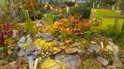 תצוגת צמחים טורפים בגנים הבוטאניים של אוניברסיטת פוטסדאם