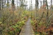 Tannersville Bog