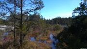 Webb\'s Mill Bog