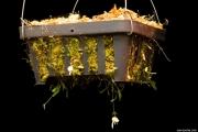 נאדיד Utricularia jamesoniana