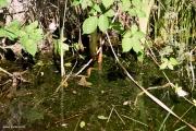 סביבת הגידול של נאדיד המים