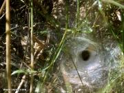 מלכודת עכביש
