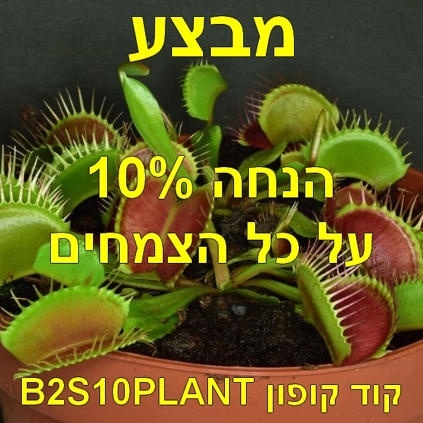 B2S10PLANT.jpg