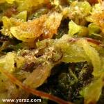 נבטי טללית Drosera brevifolia